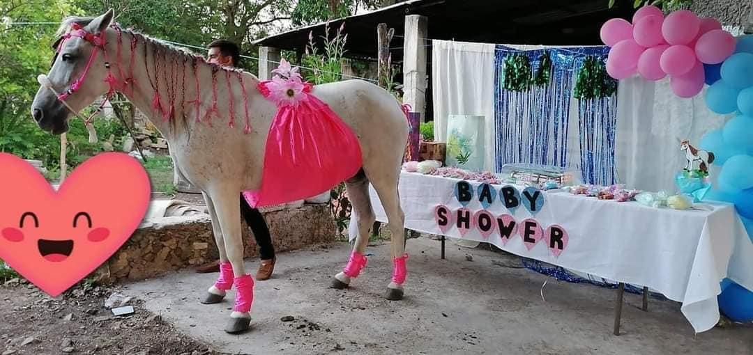 MUNDO CURIOSO: No escatimaron para festejar el baby shower de su yegua